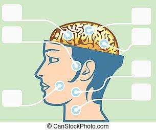 diagram, hjärna, huvud, funktioner