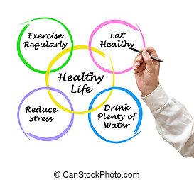 diagram, i, sunde, liv