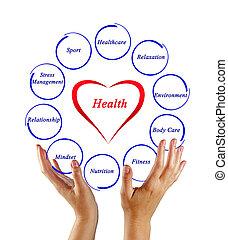 diagram, i, sundhed