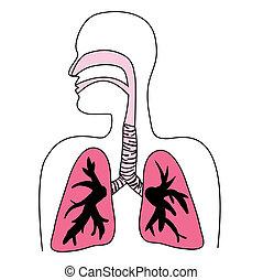 diagram, oddechowy system, ludzki