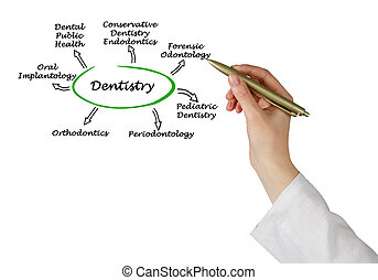 Diagram of Dentistry