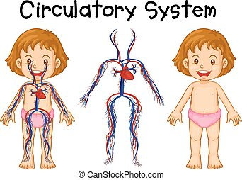 Diagram of girl with circulatory system illustration