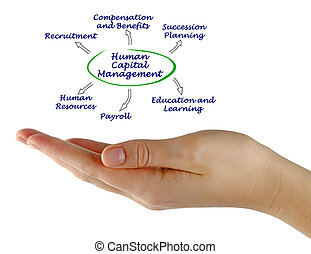 Diagram of Human Capital Management