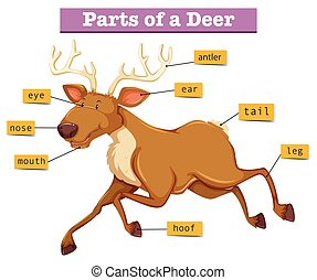 diagram, pokaz, strony, jeleń