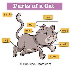 diagram, pokaz, strony, kot