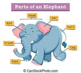 diagram, pokaz, strony, słoń