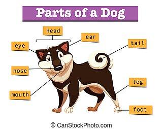 diagram, różny, część, pokaz, pies