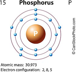 Diagram representation of the element phosphorus ...
