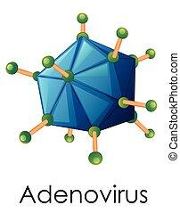 diagrama, actuación, adenovirus, estructura