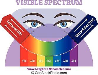 diagrama, colora espectro, ilustração, infravermelho, visível, vetorial, ultravioleta, scale., esquema