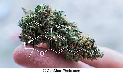 diagrama, concerto, médico, marijuana, treatment., elemento...