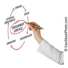diagrama, de, desenvolvimento, lifecycle