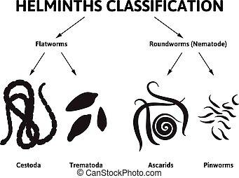 diagrama, descrevendo, vermes, classe