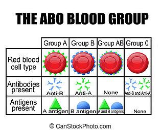 diagrama, grupo, sangue, abo