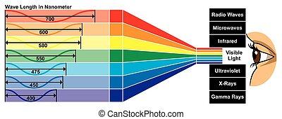 diagrama, luz, comprimento, visível, onda
