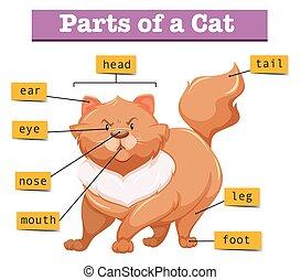 diagrama, mostrando, partes, gato