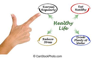diagrama, saudável, vida