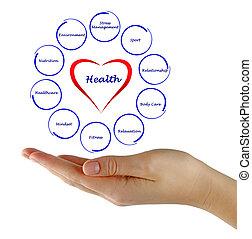 diagramm, von, gesundheit