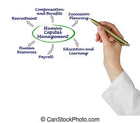 diagramm, von, menschlicher kapital, geschäftsführung