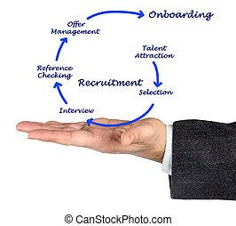 diagramm, von, recrutment, prozess