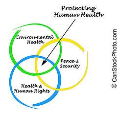 diagramm, von, schuetzen, menschliche , gesundheit