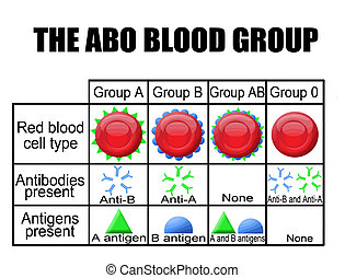 diagramma, gruppo, sangue, abo