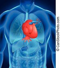 diagramme, maladie coeur, humain
