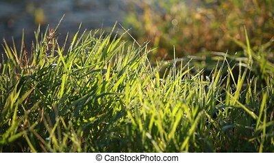diamond dew on the grass in lights