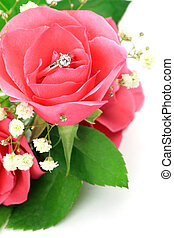 diamond ring and rose - I put a diamond ring in a pink rose ...