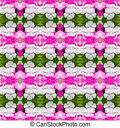 Dianthus chinensis (China Pink) seamless pattern background