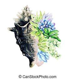dibujado, acuarela, mar, goliath, vector, mano, succulents, brillante, cáscara