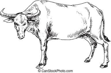 dibujado, búfalo, mano