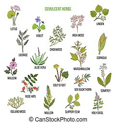 dibujado, conjunto, herbs., demulcent, mano