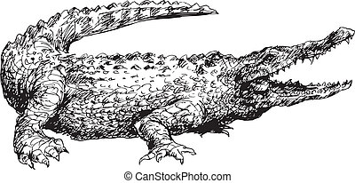 dibujado, mano, cocodrilo