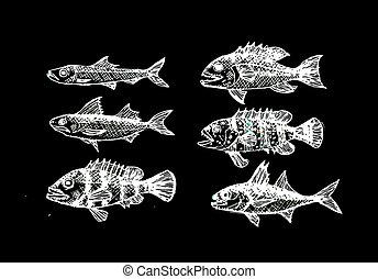dibujado, pez, vector, ilustración, mano