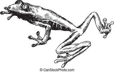 dibujado, rana, mano