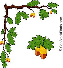 dibujado, roble, rama, con, hojas, y, bellotas