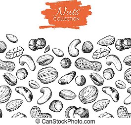 dibujado, vector, nueces, illustration., mano