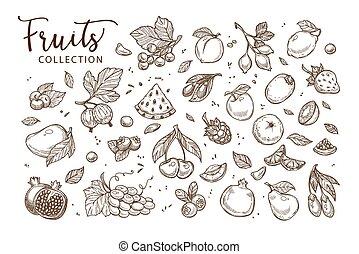dibujos, natural, sepia, colección, sabroso, fruits,...