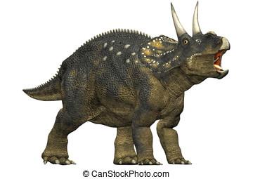 diceratops dinosaur roaring. a herbivorous dinosaur from the...