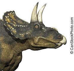 diceratops, dinosaurie, närbild
