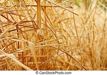 dichtbegroeid boven, achtergrond, textuur, van, droog, gras