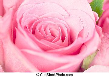 dichtbegroeid boven, de, zoet, licht, roze, op, roze, abstract, verlichting, achtergrond, voor, liefde, en, romace, concept
