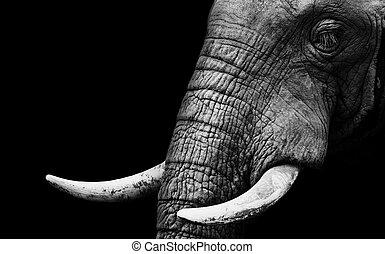 dichtbegroeid boven, elefant