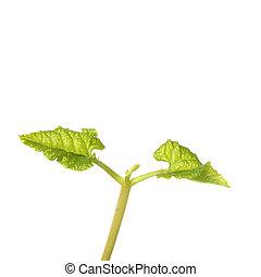 dichtbegroeid boven, kiemplant
