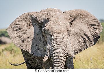 dichtbegroeid boven, van, een, elefant, in, chobe.