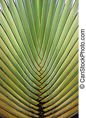 dichtbegroeid boven, van, groot, palmboom, blad