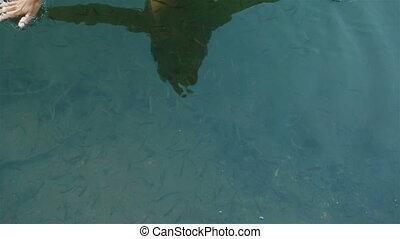 dichtbegroeid boven, van, manicured, handen, in, de, schoonmaken, blauw water, met, velen, weinig; niet zo(veel), vissen, zwemmen, alles, around., adembenemend, moment, van, harmonie, menselijk, met, natuur, in, carpathian, bergen., visje, spa, voor, huidzorg