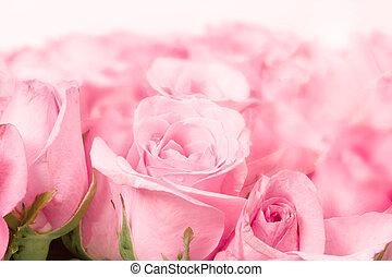 dichtbegroeid boven, zoet, licht, roze, op, roze, abstract, verlichting, achtergrond, voor, liefde, en, romace, concept