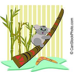 didgeridoo, orso koala, bo